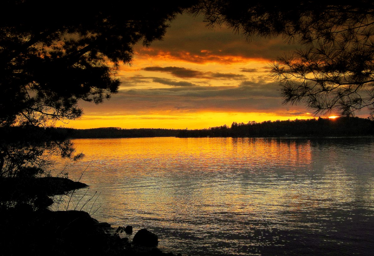 crane lake sunset framed in by pine trees author pluskwik paul