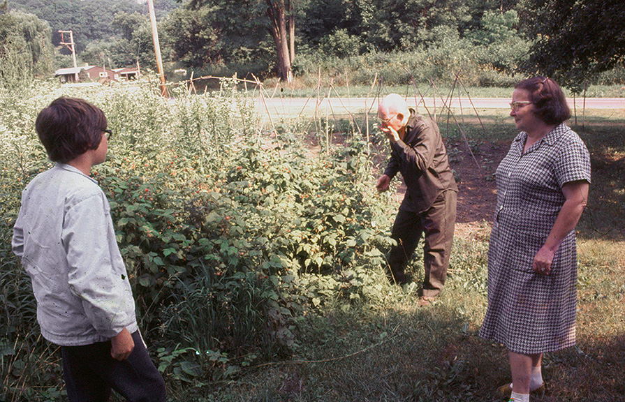 strawberry harvest north of chillicothe author s siegel honolulu gerry