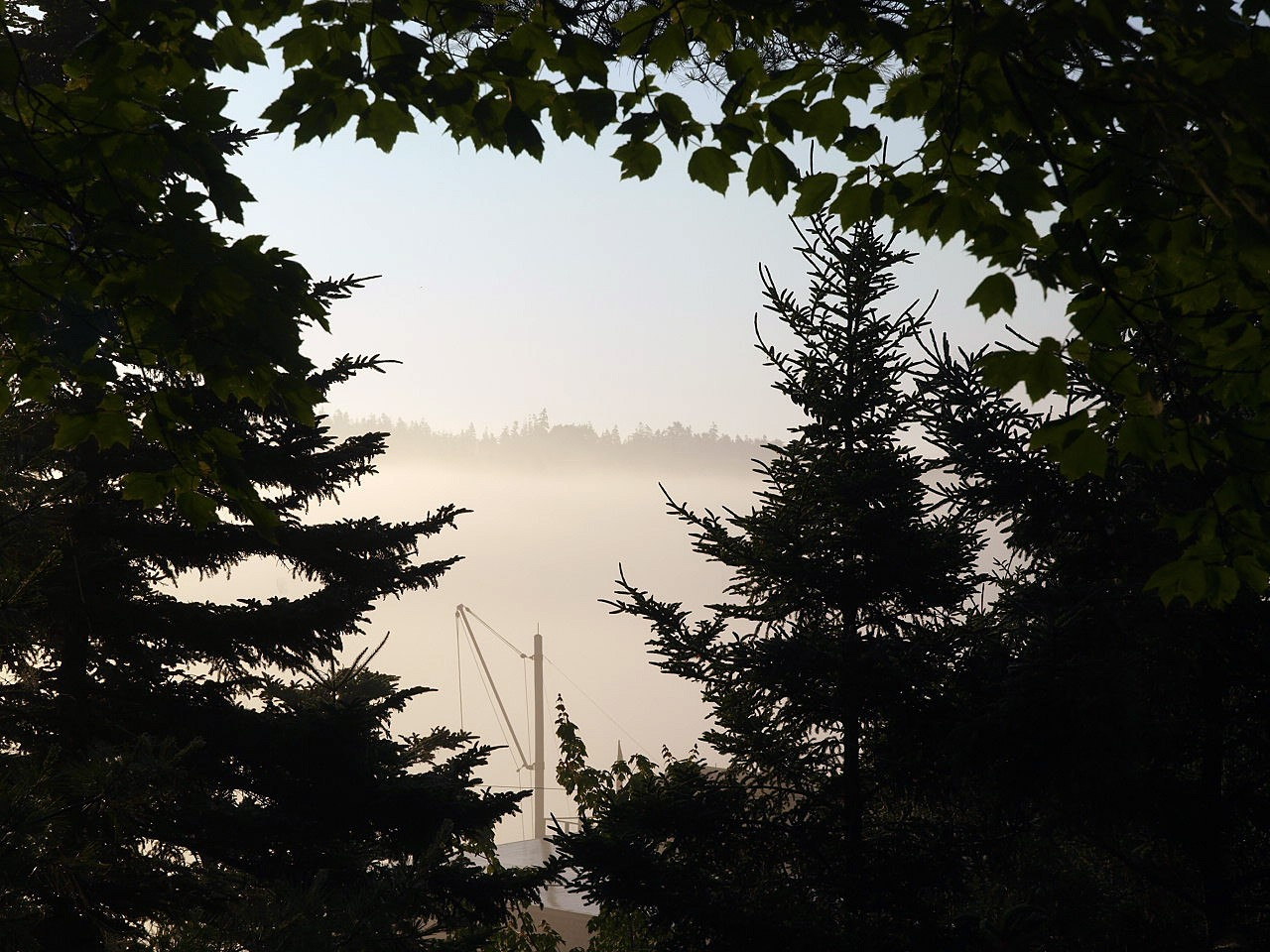 seal harbor morning fog author hull ray