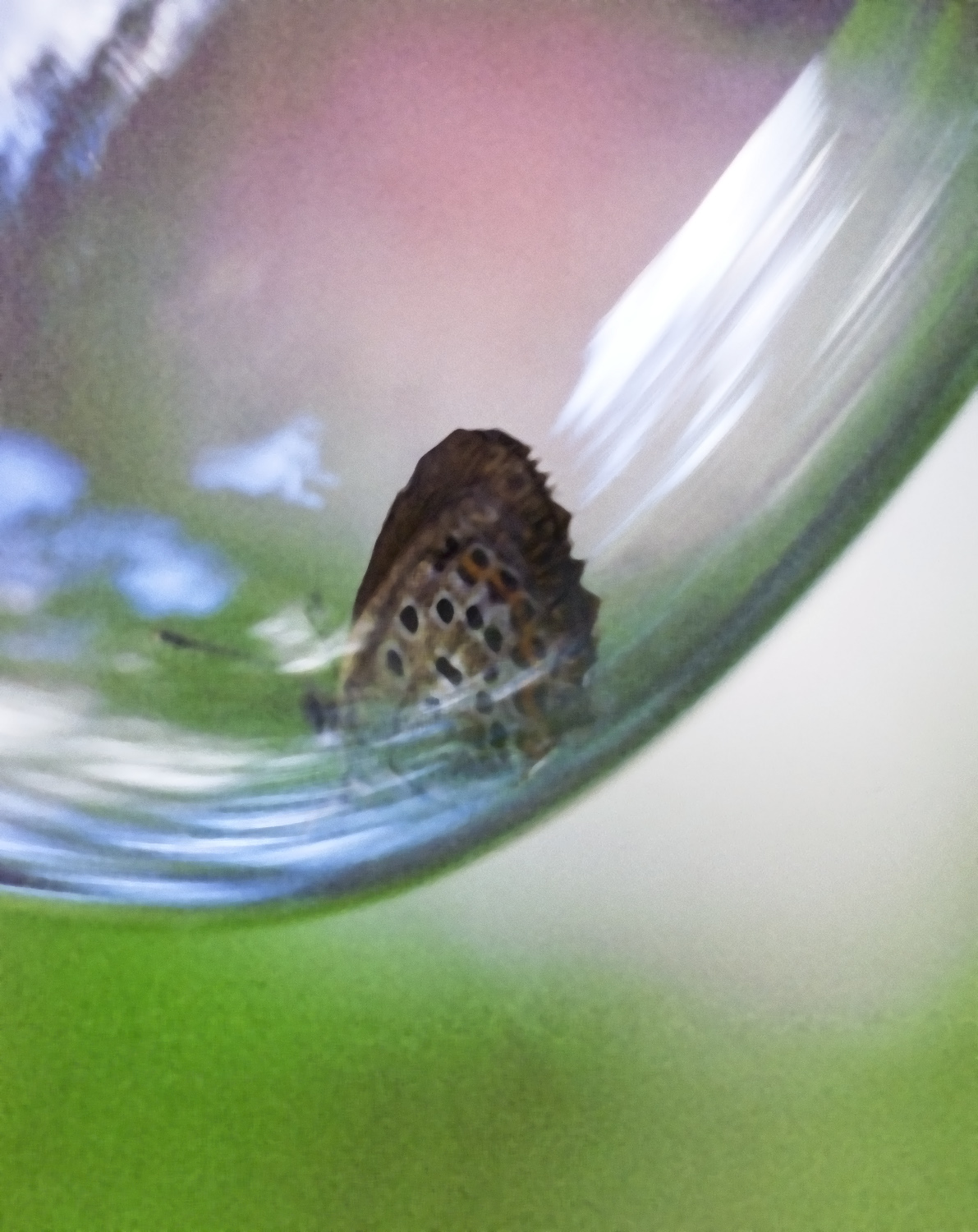 in the bubble author soini hannu