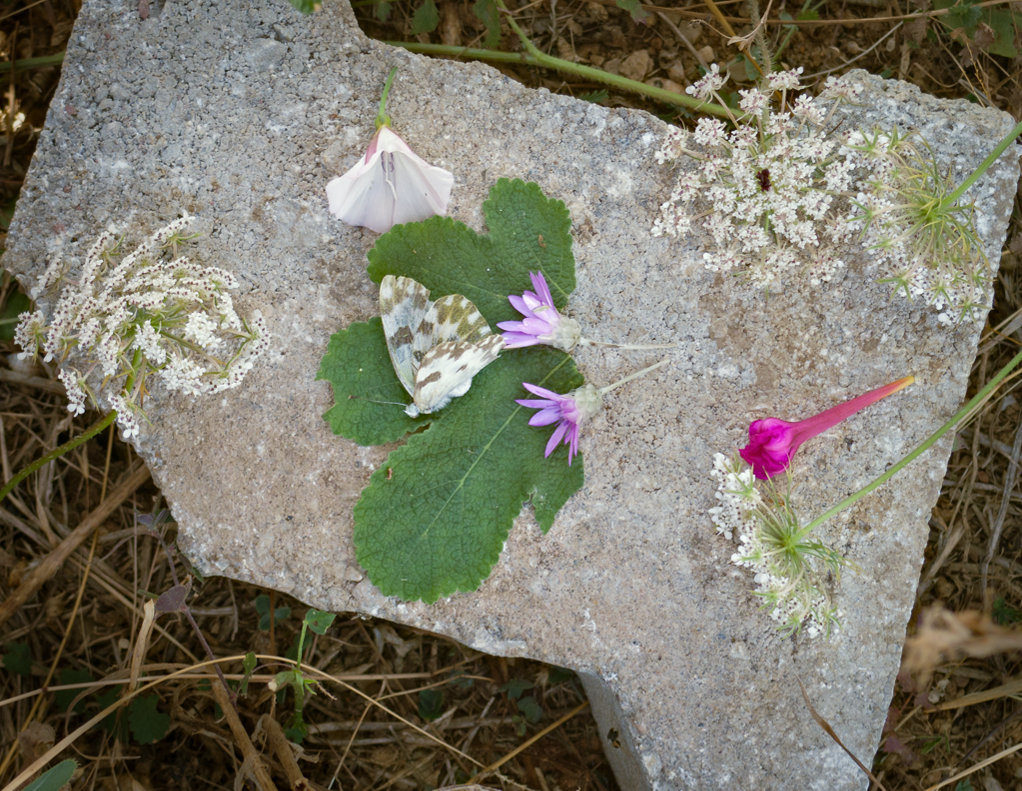 olcay has made a grave for the butterfly author c celasun bulent