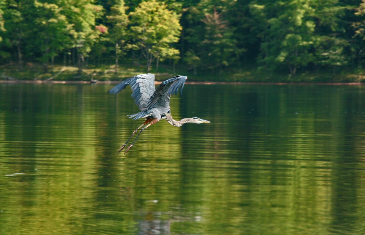 great blue img aw author sava gregory and verena