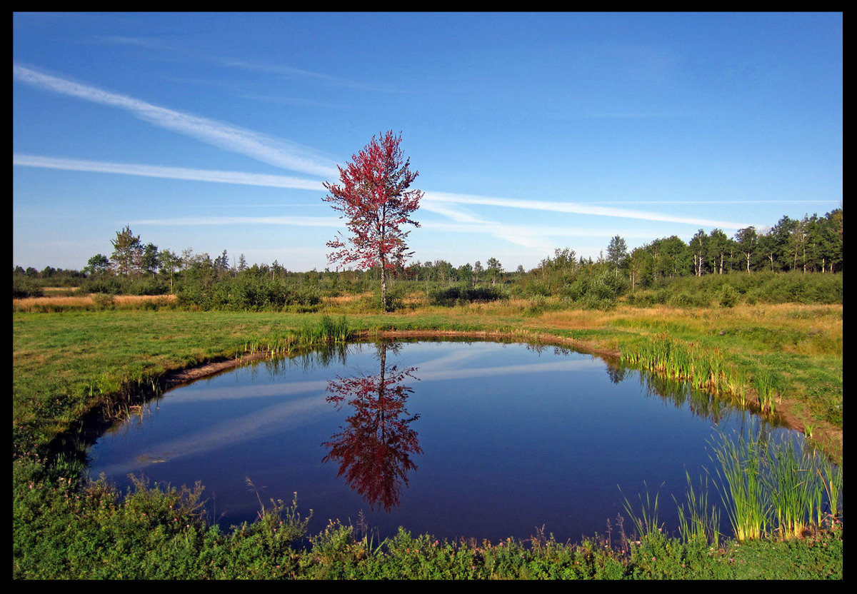 lone maple tree reflects it s fall colors author pluskwik paul