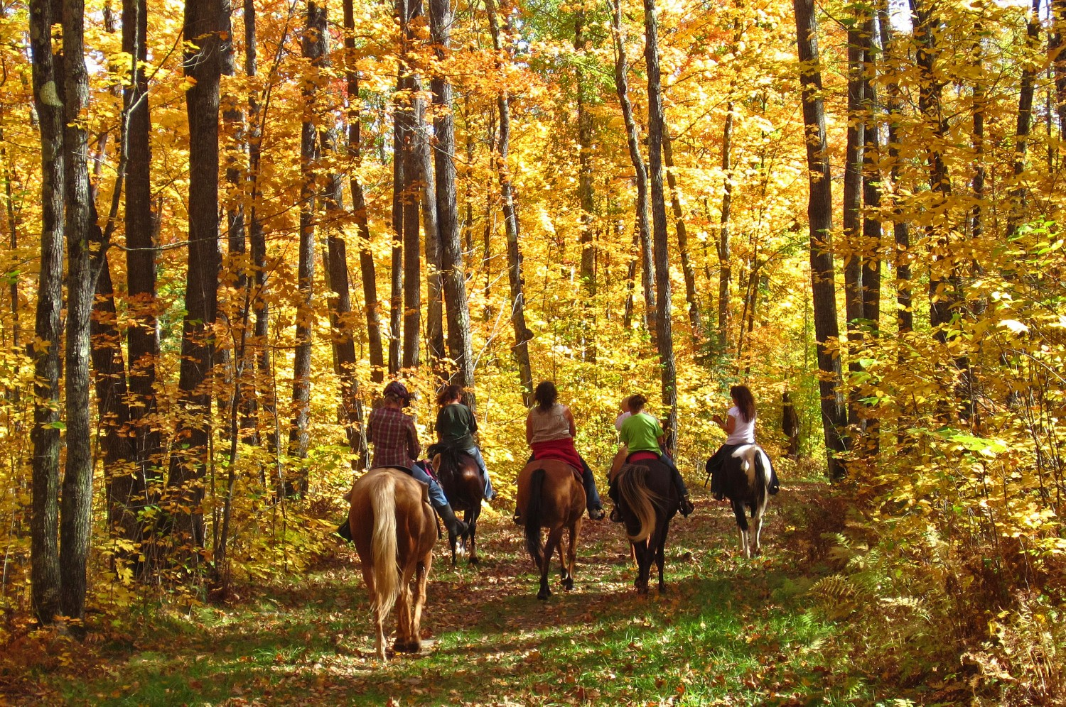 a fall horse back ride author pluskwik paul