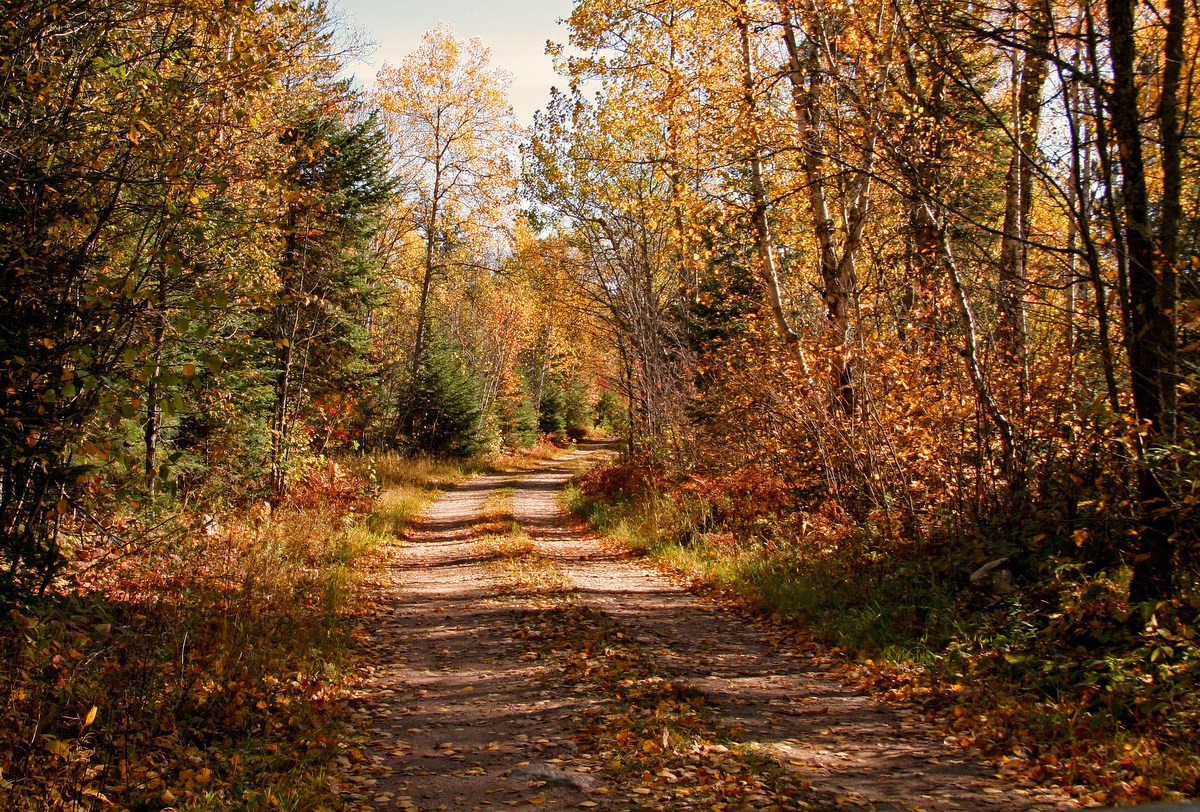 old logging road in the fall author pluskwik paul