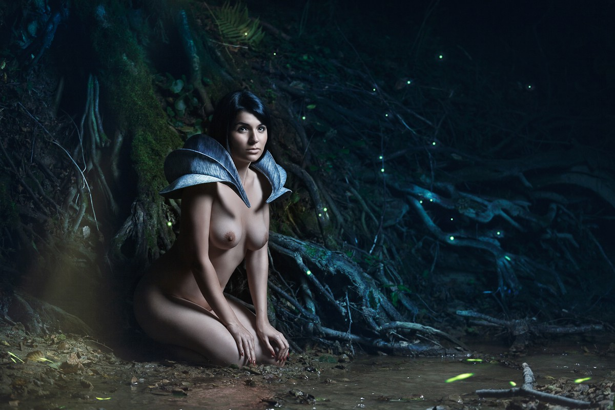 land of the forest elves author dani i