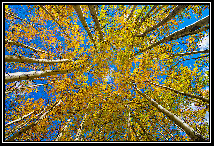 up some aspens by olie author gricoskie jared