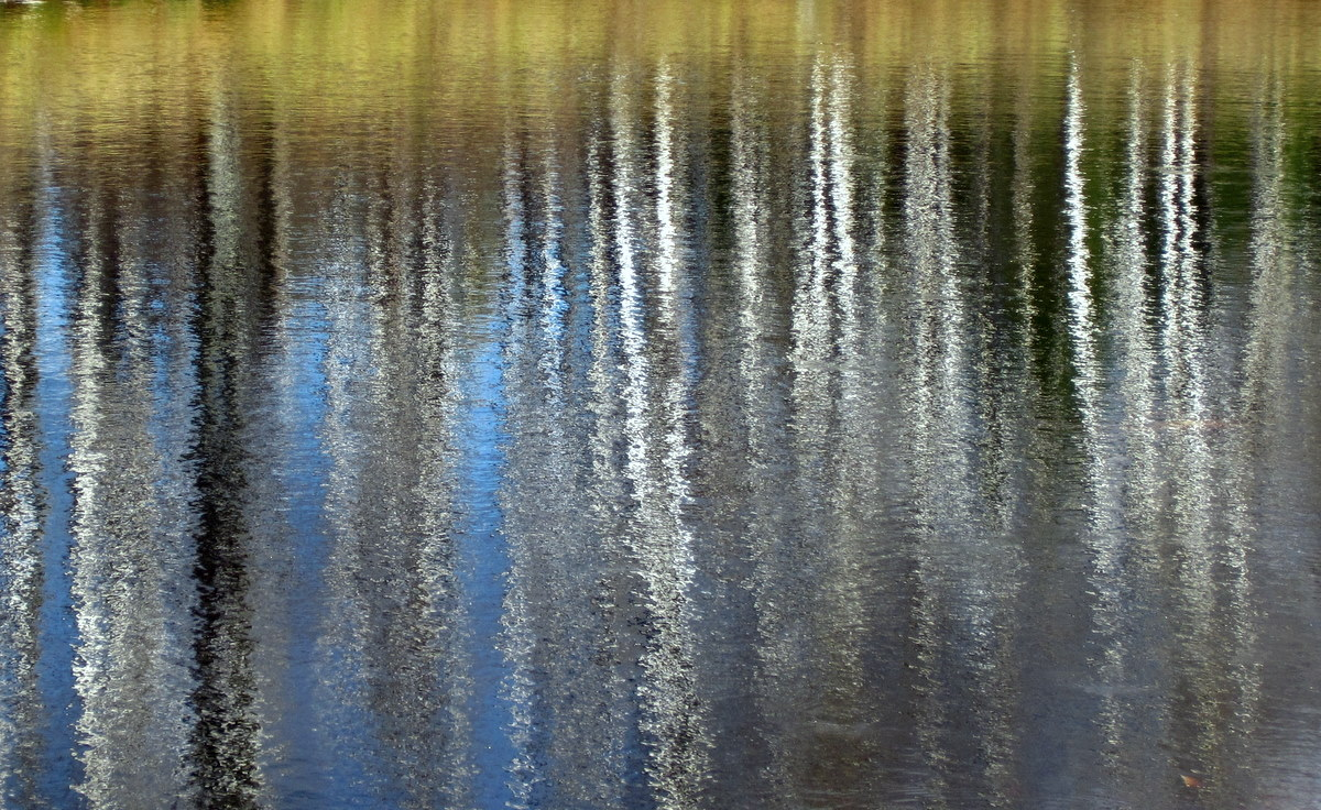 fall reflections in a small pond author pluskwik paul