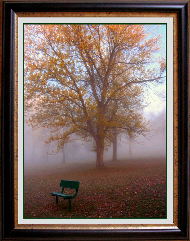 a foggy fall morning in the park author pluskwik paul