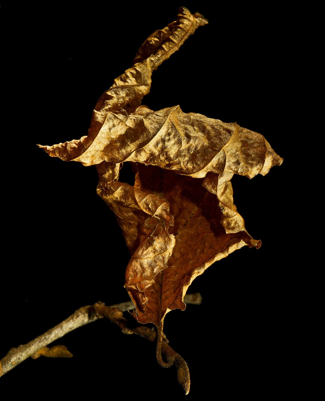 leaf monster img aw author sava gregory and veren verena