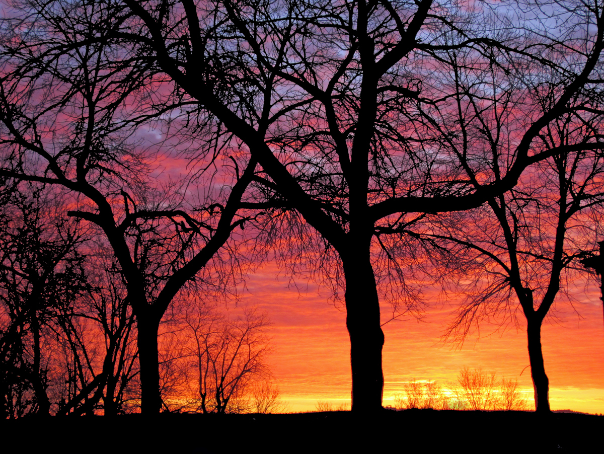 amazing winter sunrise through the trees author p pluskwik paul