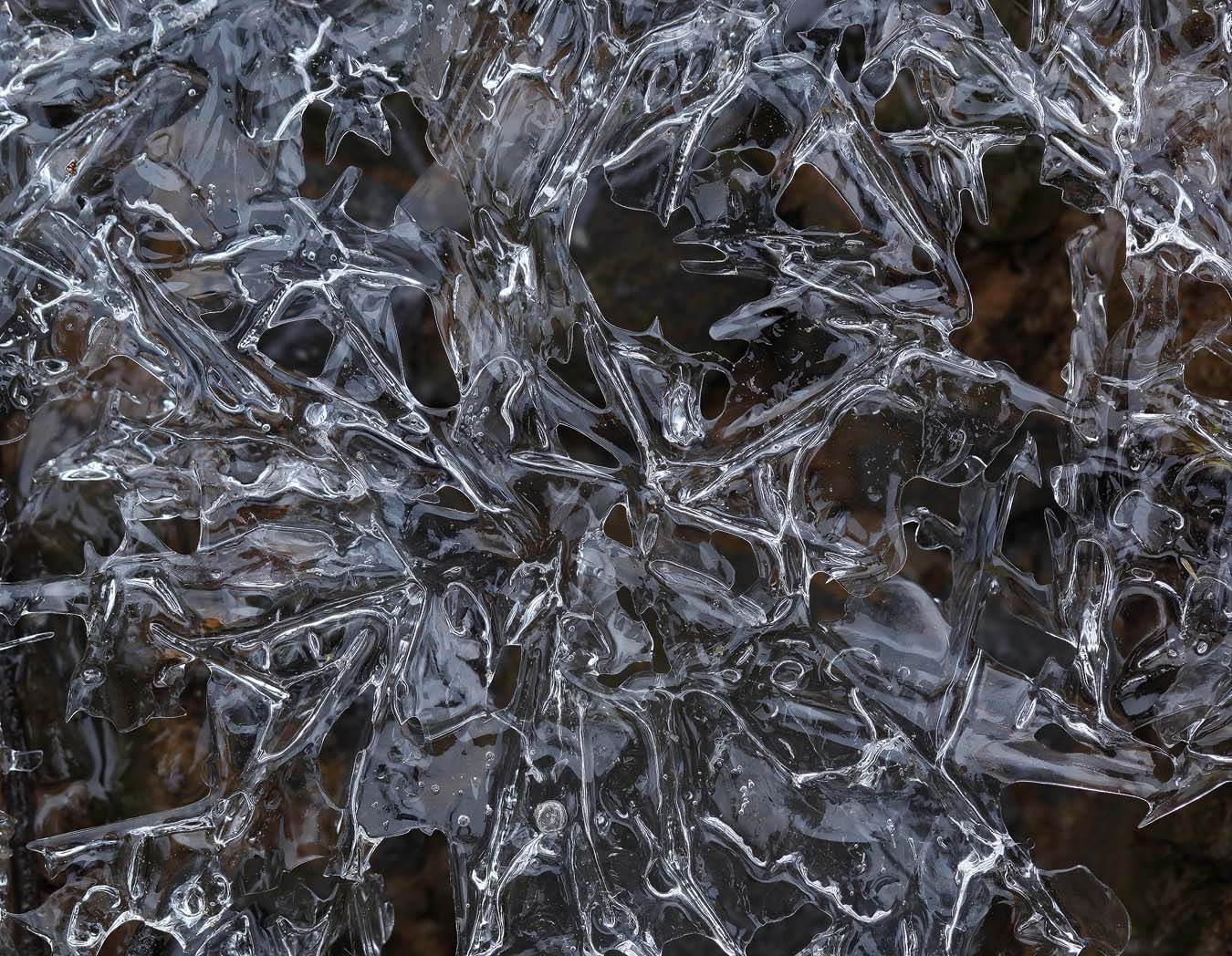 ice flowers img aw author sava gregory and verena