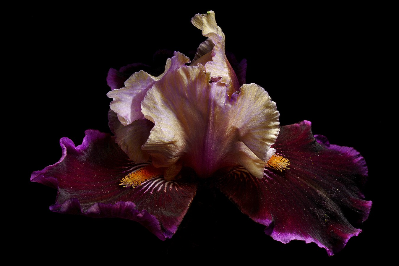 iris summer revisited img aw author sava gregory and verena