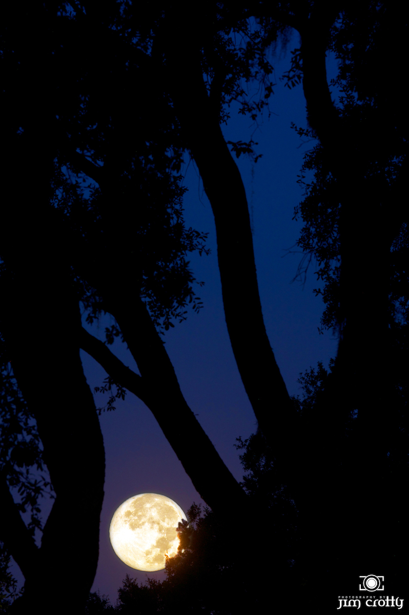 august moonset author crotty jim
