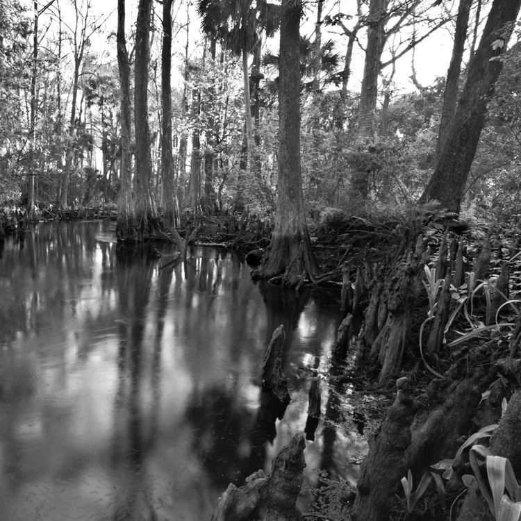 loxahatchee river edit author watson richard