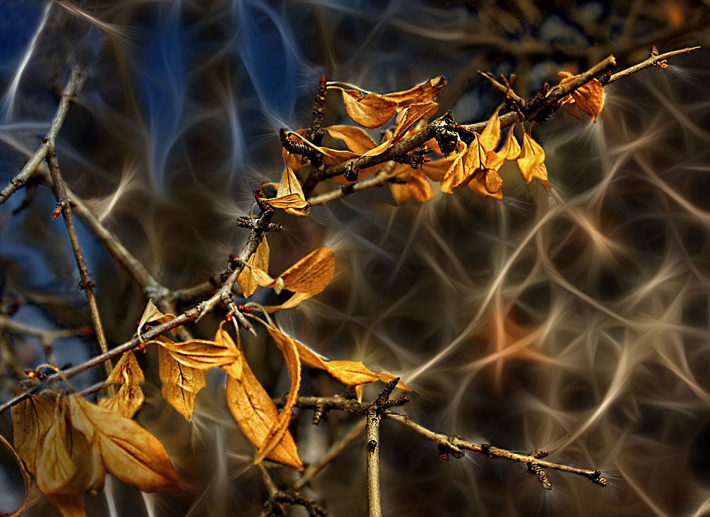 old leaves and new buds large view author carp r radu