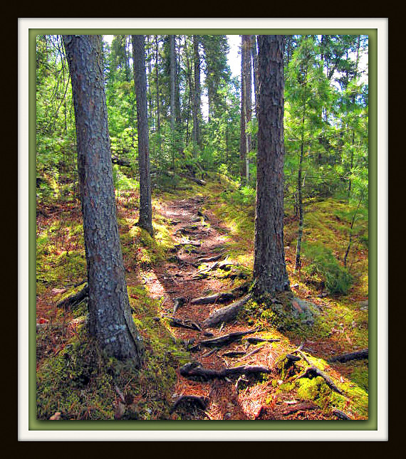 spring walk through the tall pines author pluskwi pluskwik paul