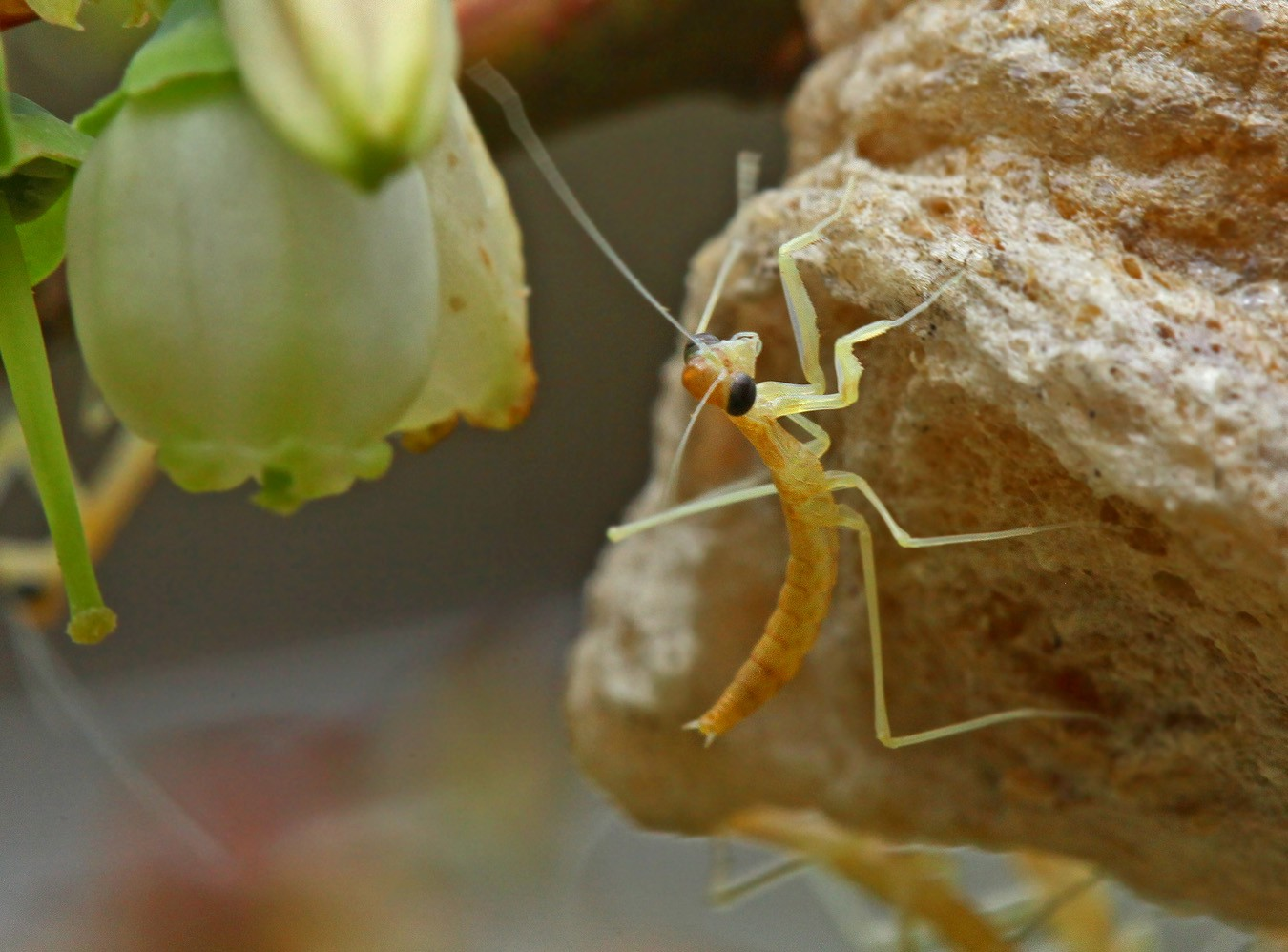 baby mantis leaving home img aw author sava grego gregory and verena
