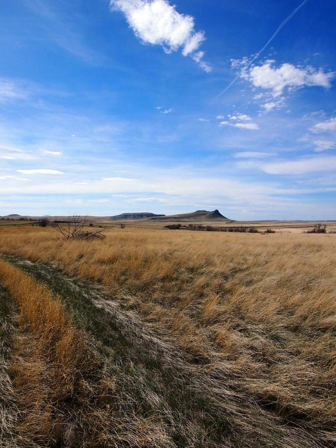 butte south of choteau mt author hull ray
