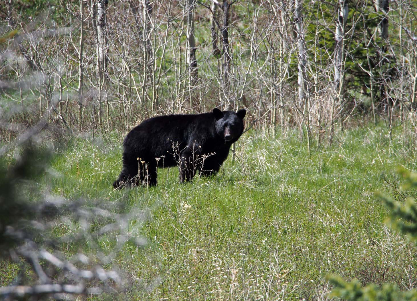 black bear mt swiftcurrent lake author hull ray