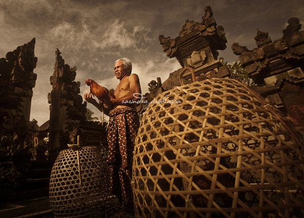 old balinese man with his rooster author prakarsa rarindra