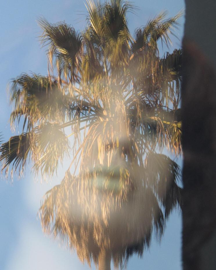 face in the palm tree author dreizler bob