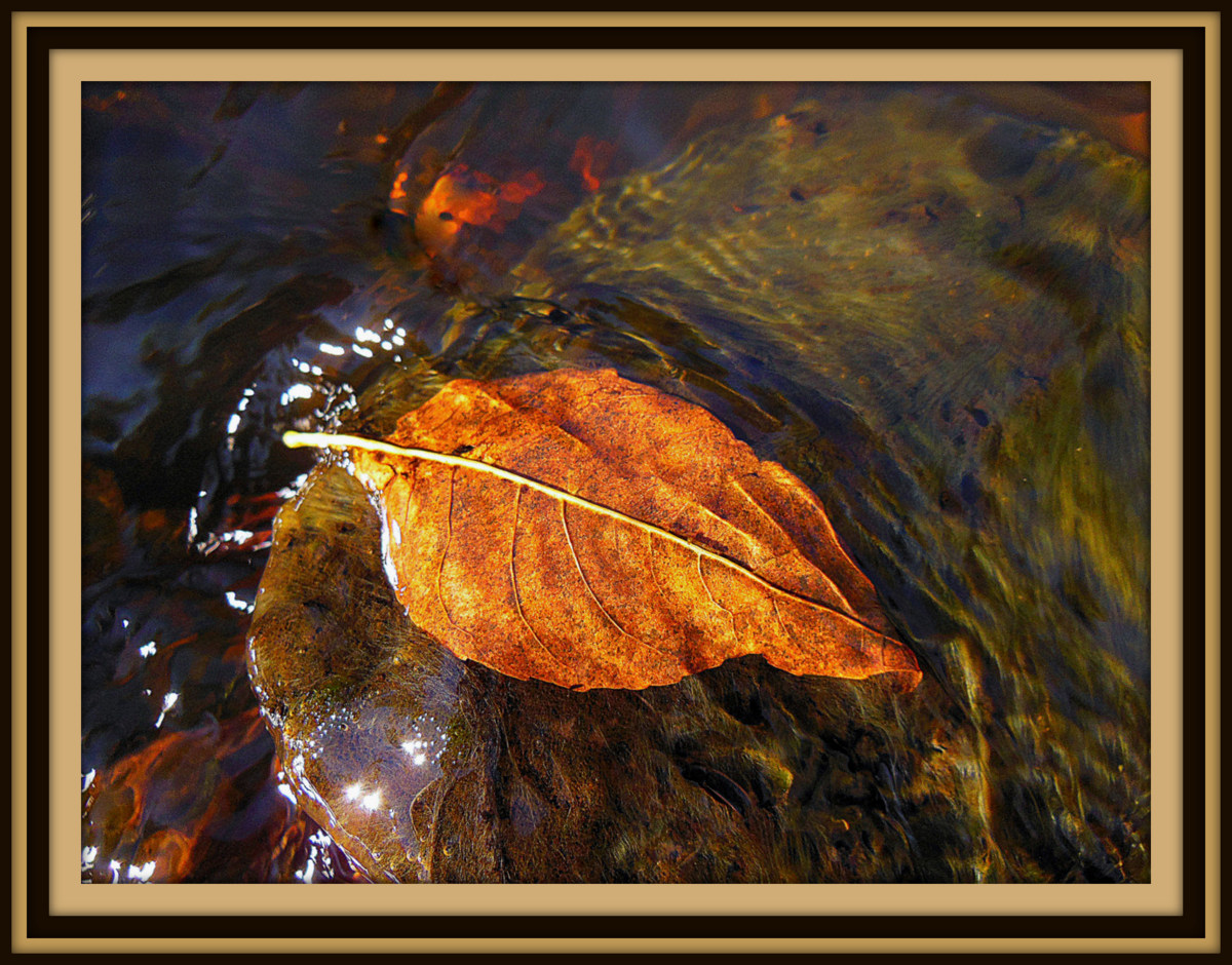 flowing with the seasons author pluskwik paul