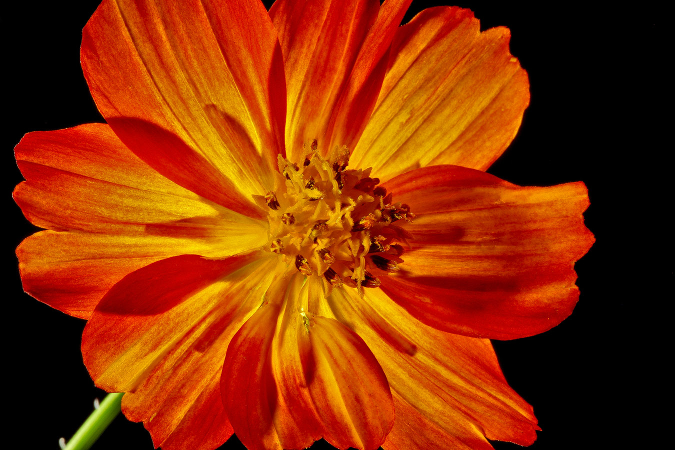 cosmos backlit img aw author sava gregory and ver verena