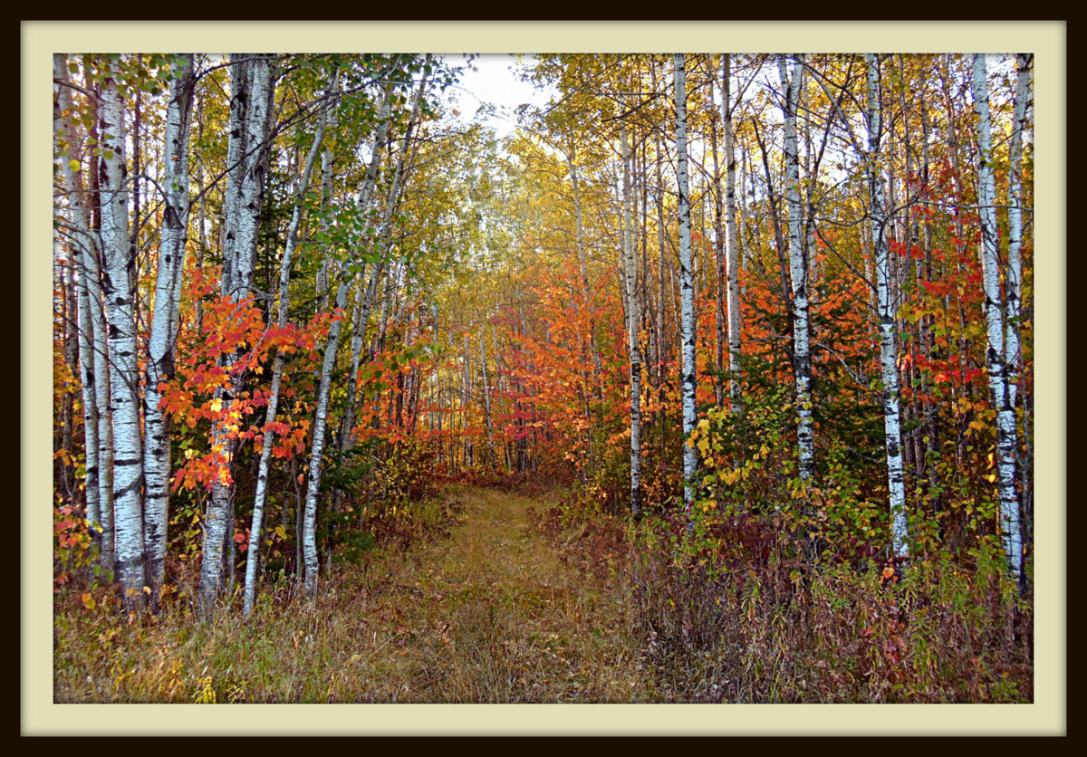 fall view of the hunter walking trail author plus pluskwik paul