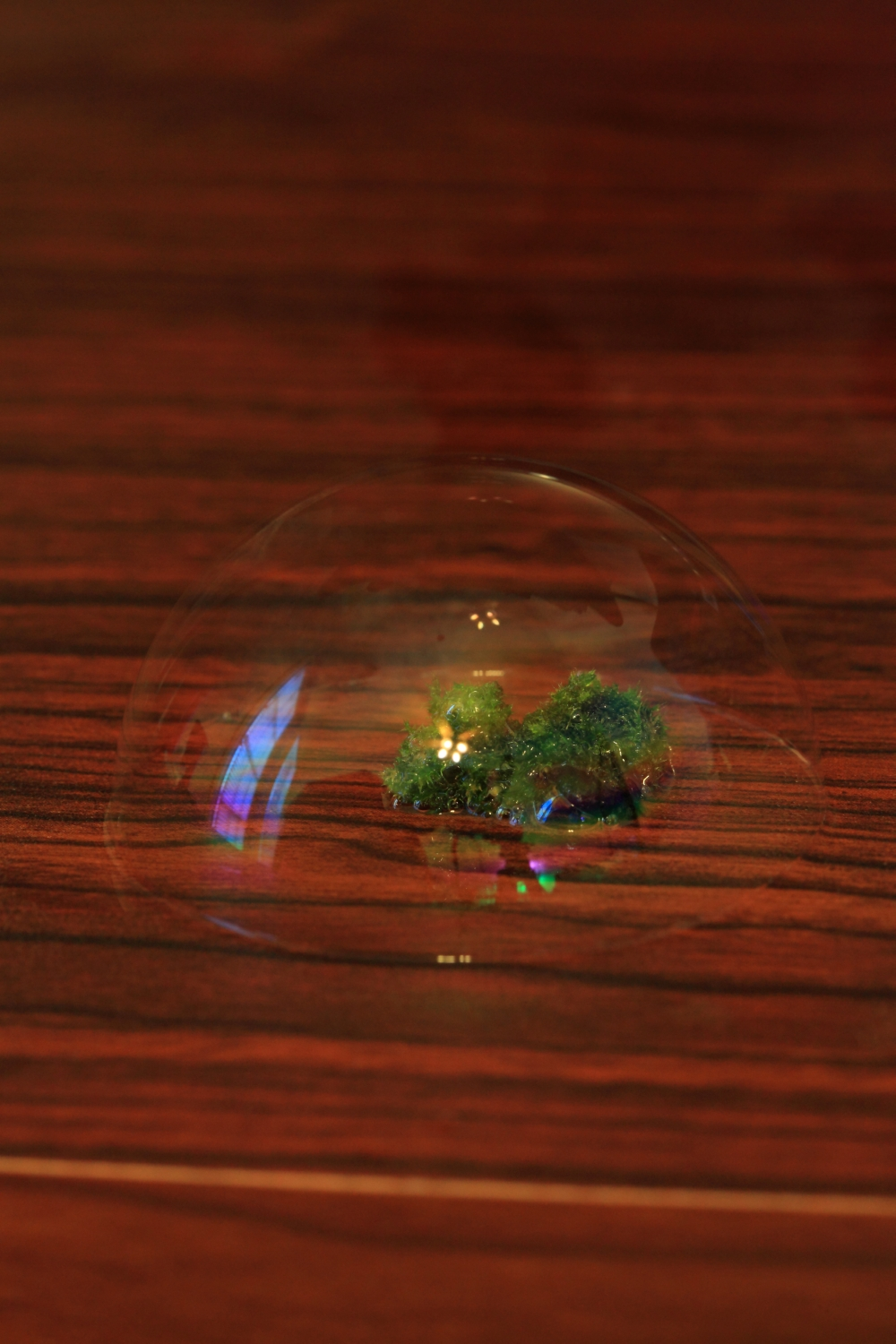 biodome moss in a soap bubble author szulecki jo joshua
