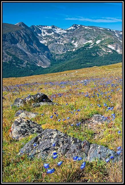 tundra harebell field august author gricoskie j jared