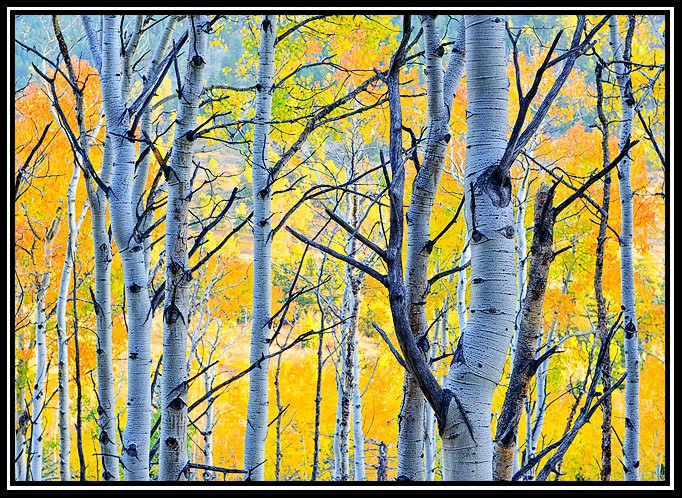 aspens color author gricoskie jared