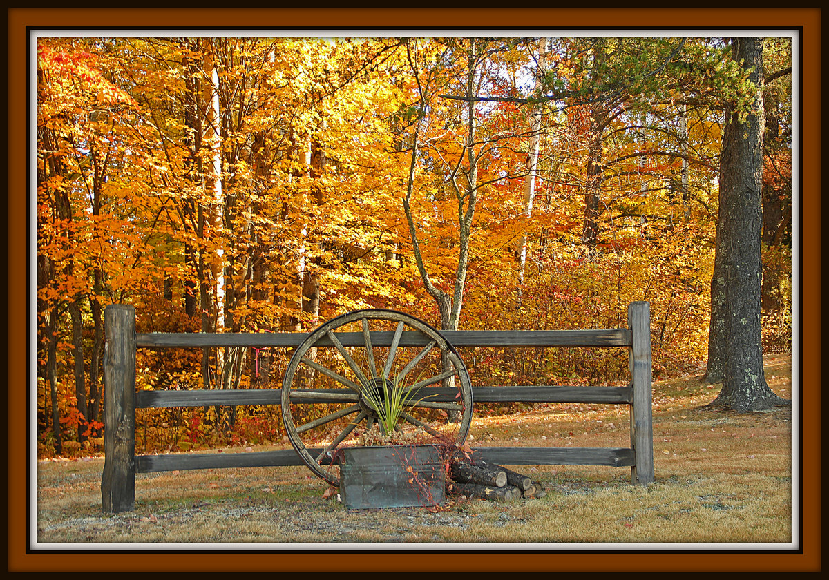 fall still life author pluskwik paul