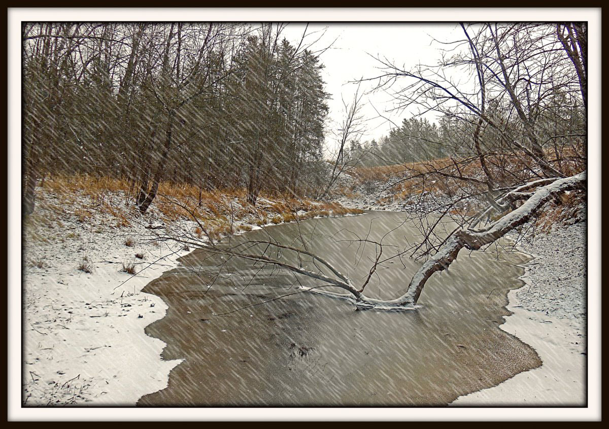 first snow and freeze of the season author pluskw pluskwik paul