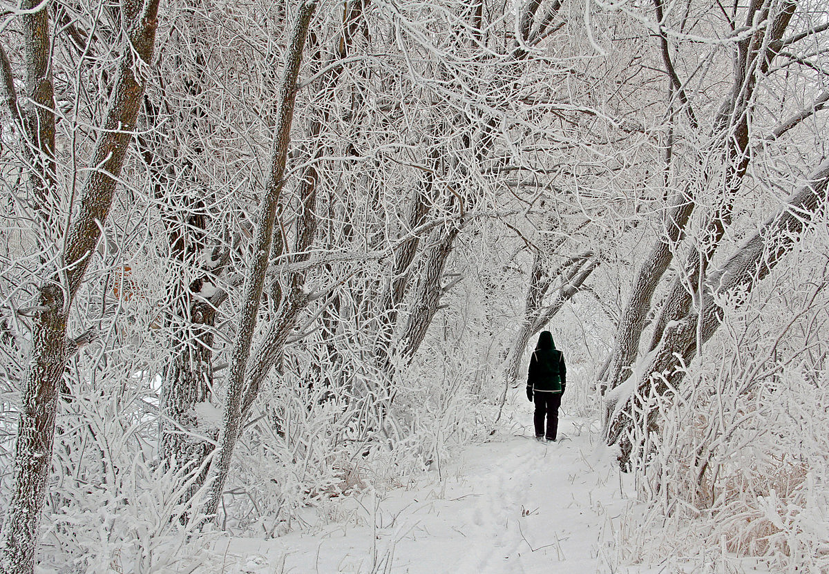 magical walk through the frosty forest author p pluskwik paul