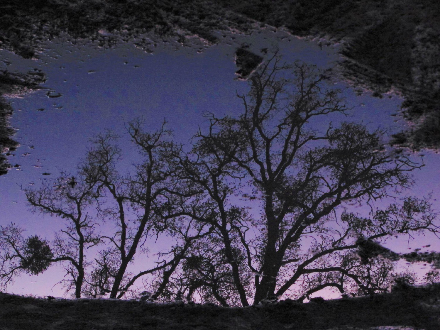 tree reflection in puddle author dreizler bob