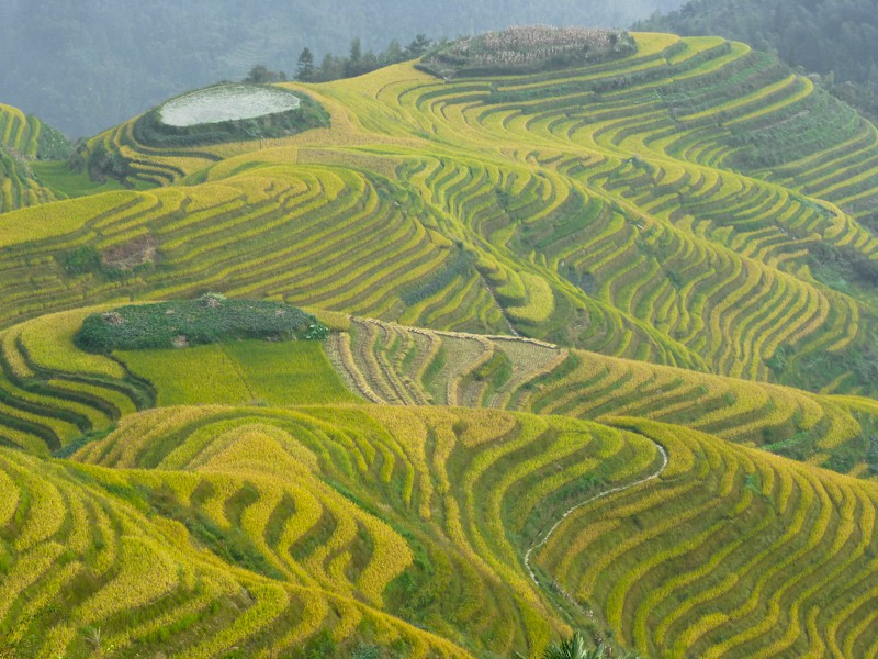 longji dragon spine rice terraces author downs ji jim