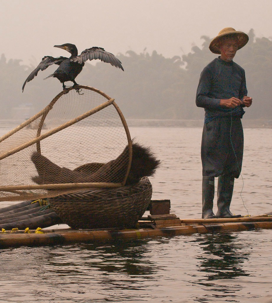 cormorant fisherman on the li river author downs jim