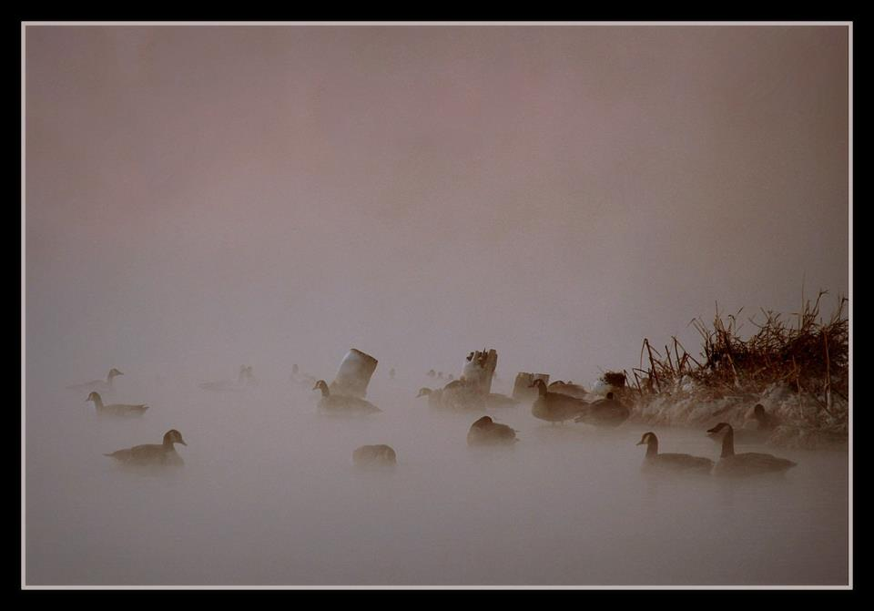 geese in the morning fog author pluskwik paul