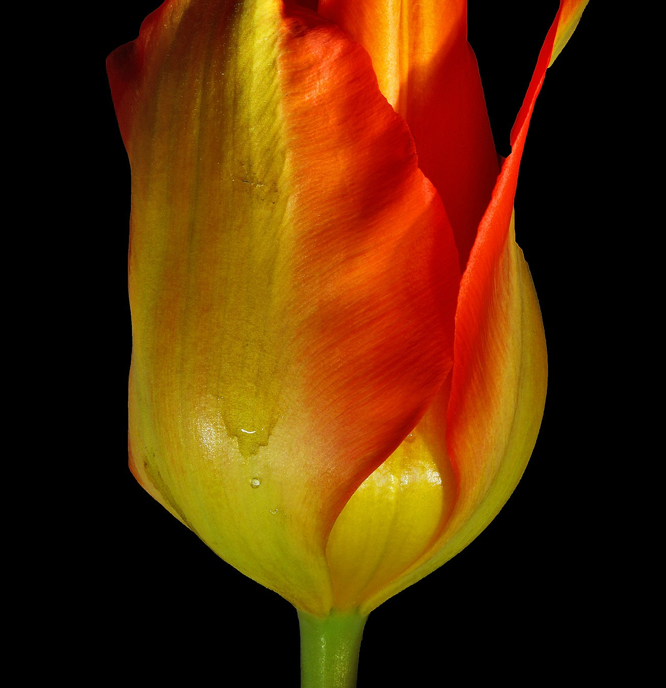 lil tulip img aw author sava gregory and verena