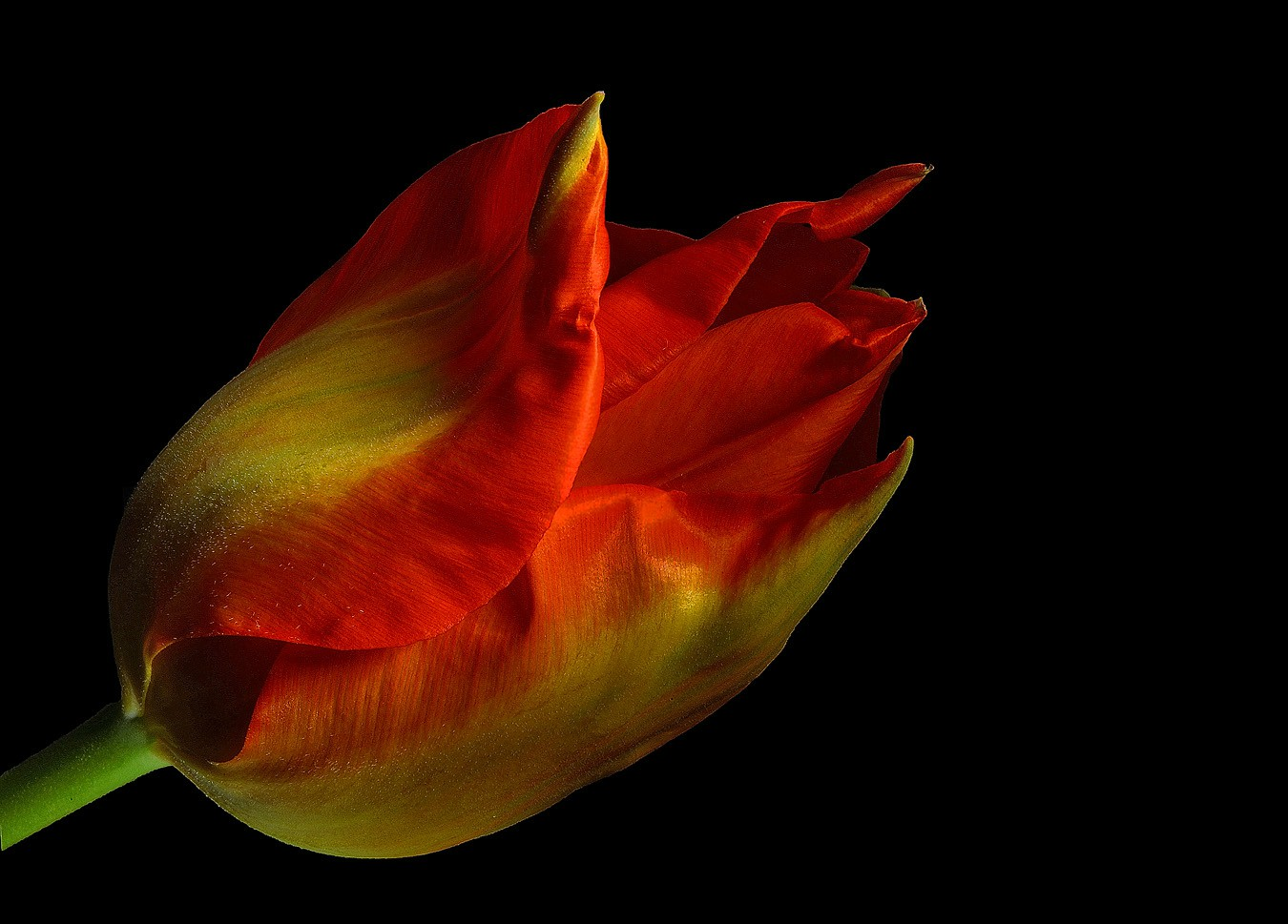 lil tulip side img aw author sava gregory and ver verena