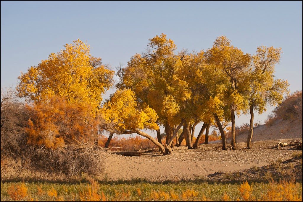 inner mongolia autumn at ejinaqi author downs jim