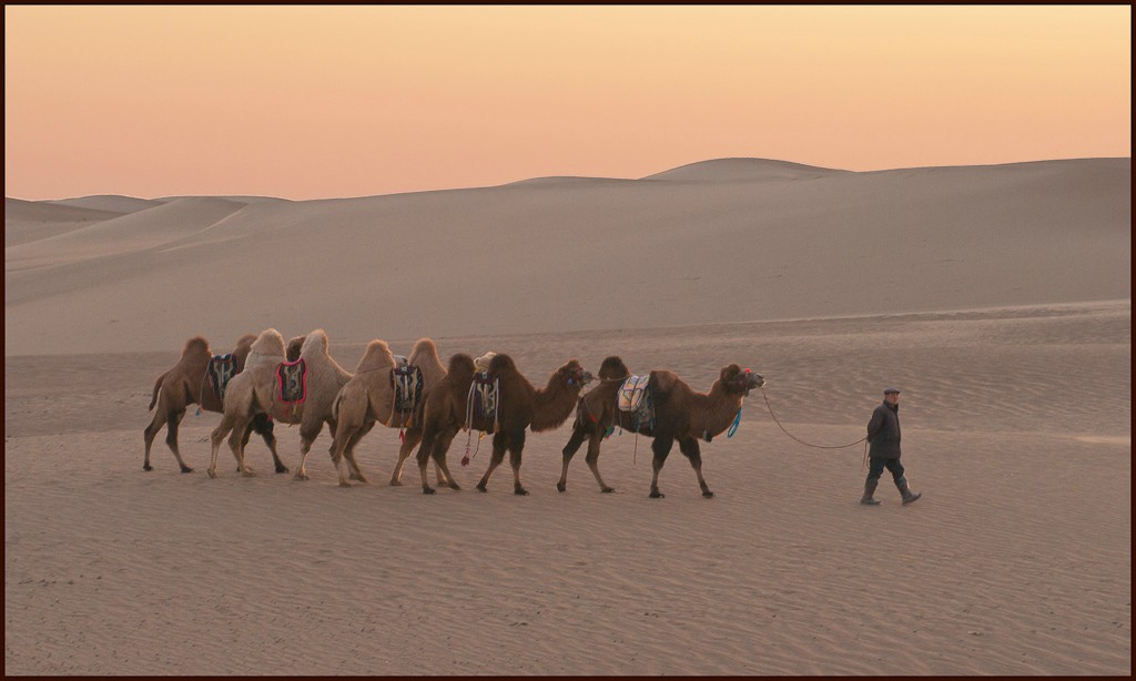 gobi desert caravan at sunrise large view author downs jim