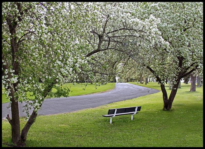spring blossoms in the park author pluskwik paul