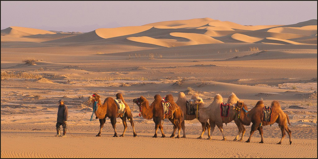 gobi desert caravan near ejina qi author downs ji jim