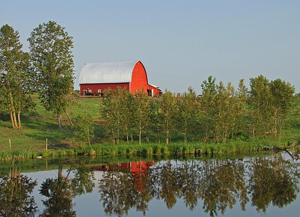 reflections across the pond at farm author pl pluskwik paul