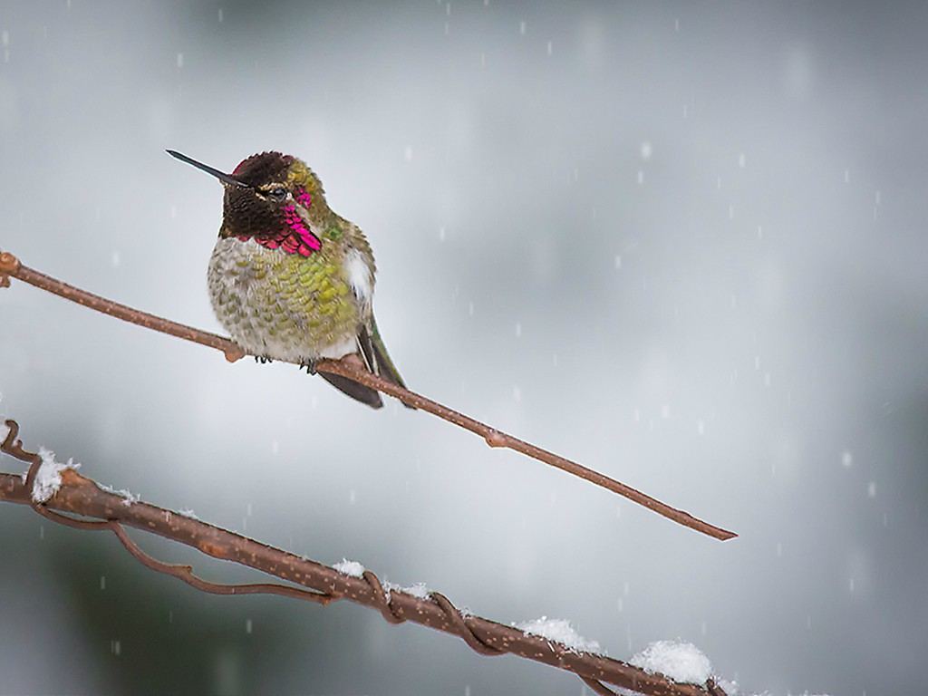 holiday hummer author dube dave