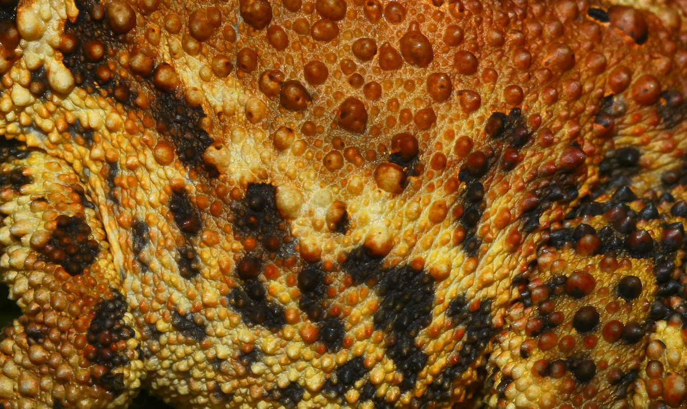 toad skin img abw author sava gregory and verena