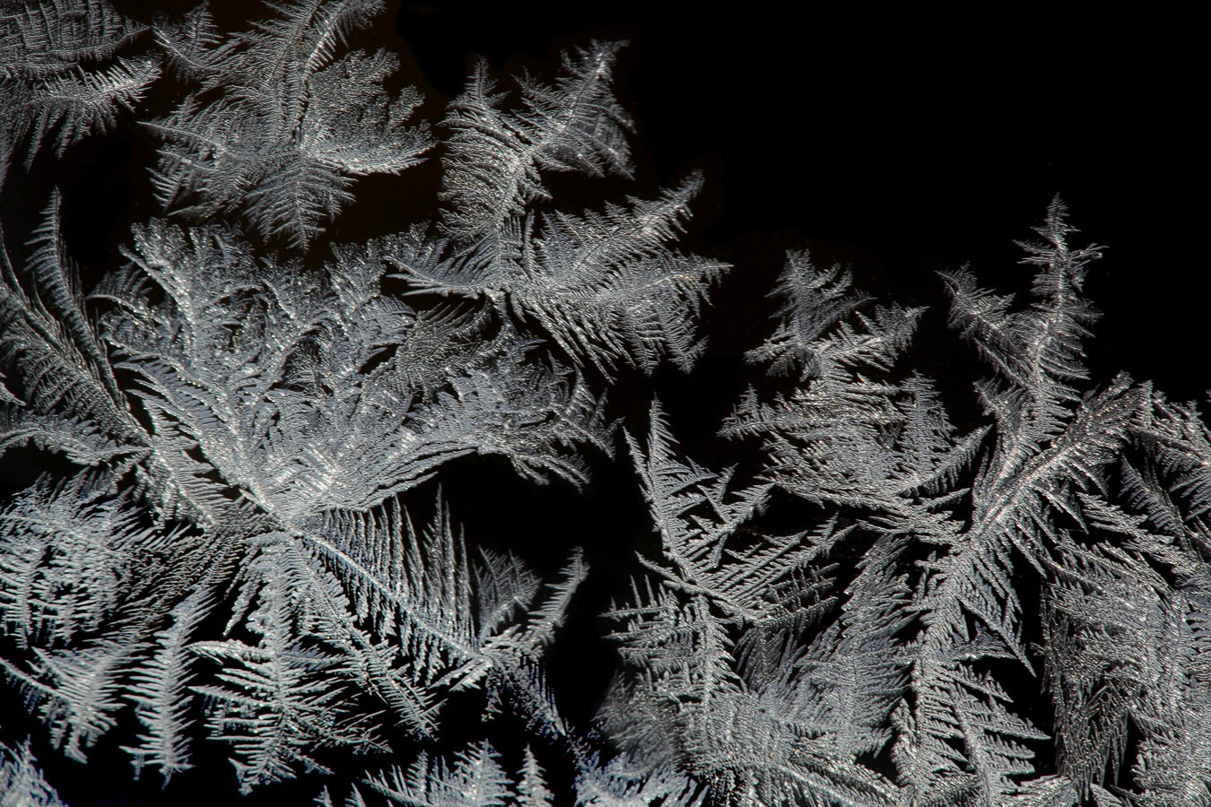 frost flowers img aw author sava gregory and vere verena