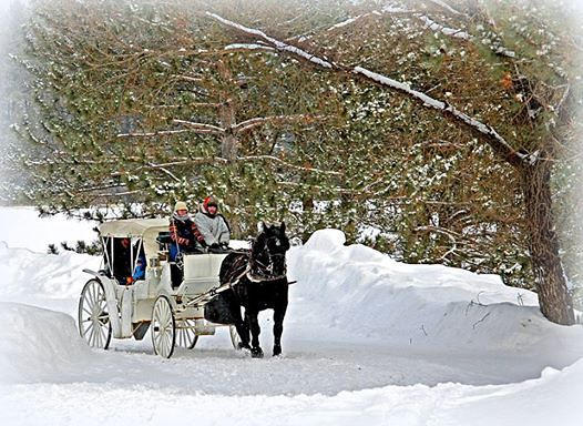 horse carriage ride along the back road author pl pluskwik paul
